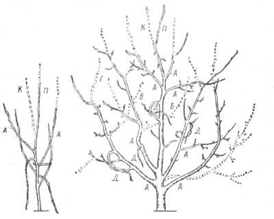 Примерная схема обрезки